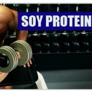 soy-protein-optimum